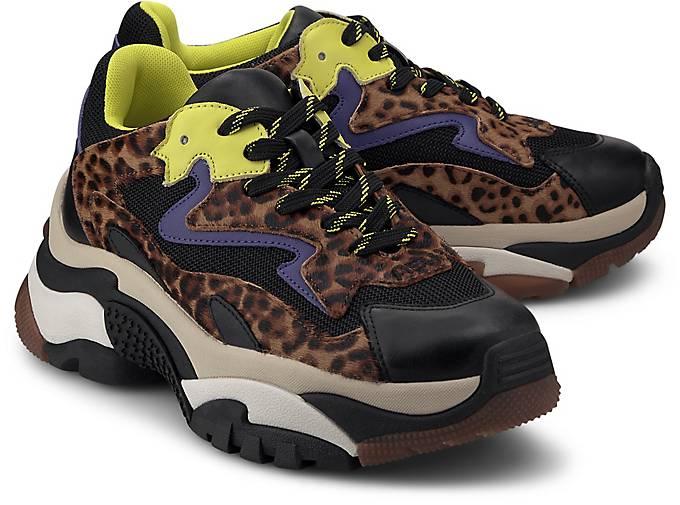 Ash Sneaker ADDICT E