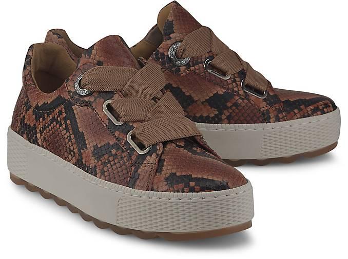 G Sneaker In Kaufen Gabor Florenz Python Low BxordCeW